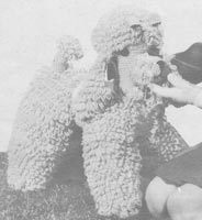 vintage knitting pattern for toys poodle